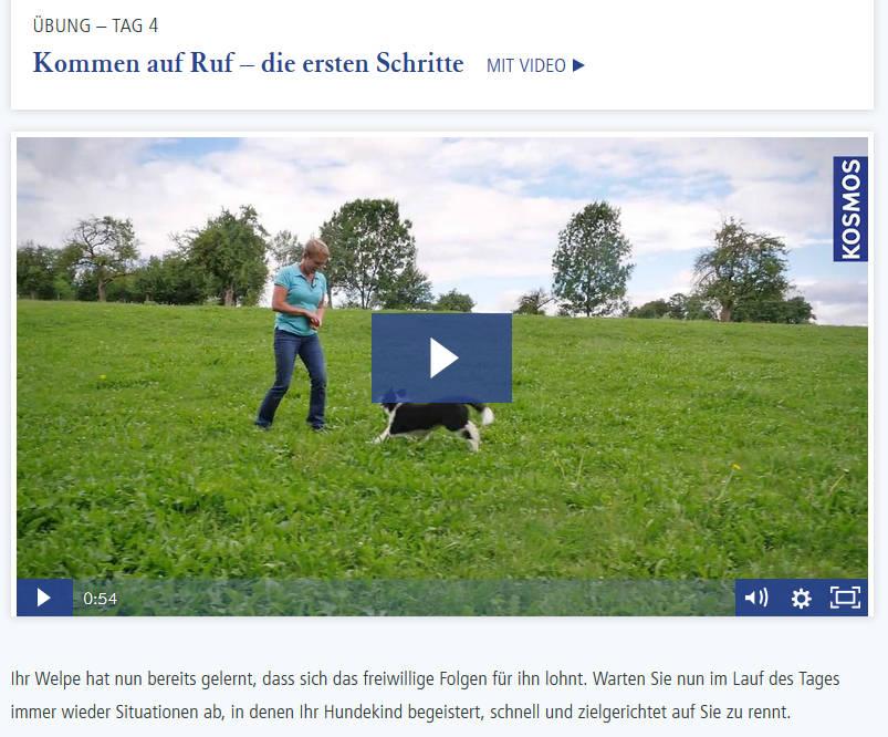 welpenkurs-screenie-video