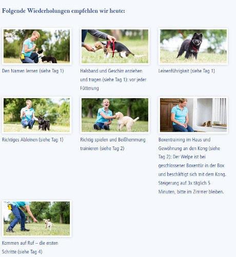 Jeden Tag empfiehlt Ihnen der Online-Welpenkurs weitere Übungen, wenn Ihr Welpe und Sie mehr üben wollen.