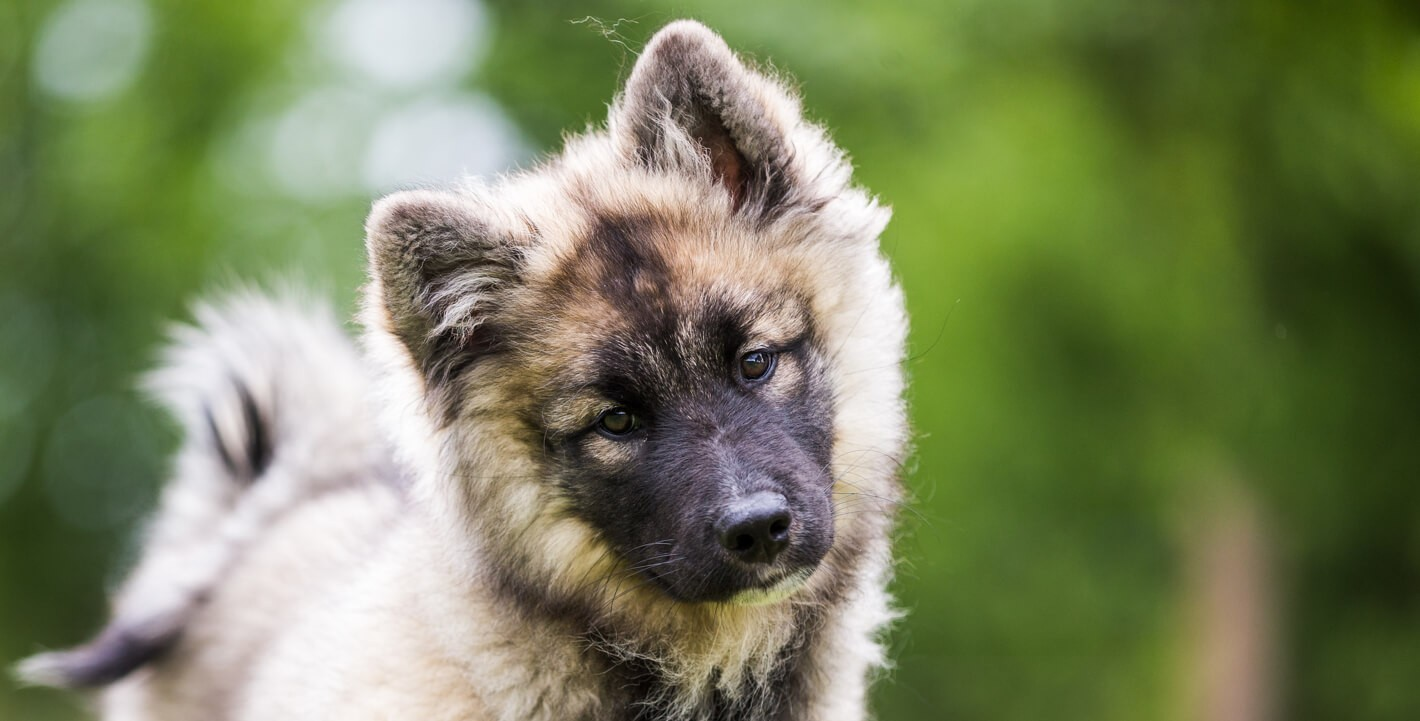 hunde-steuer-bild