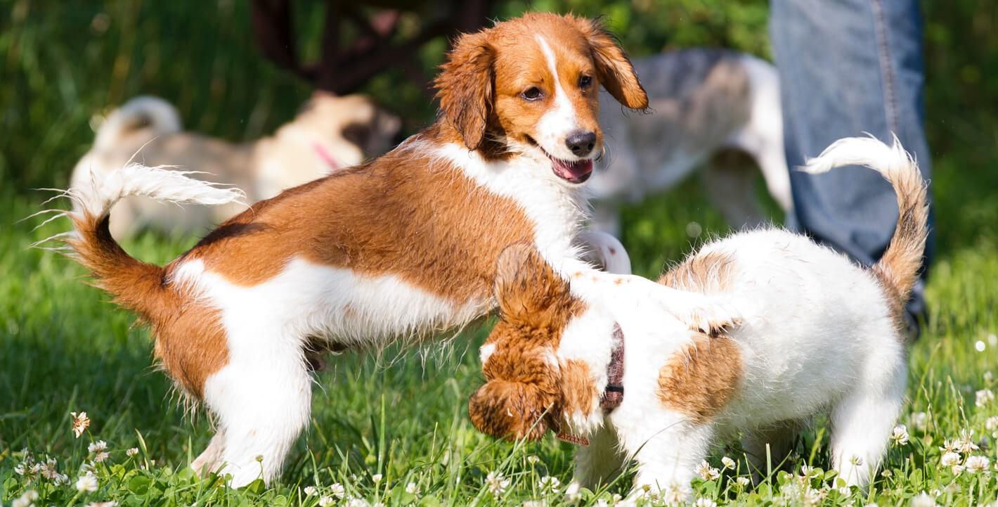 hunde-versicherung-bild